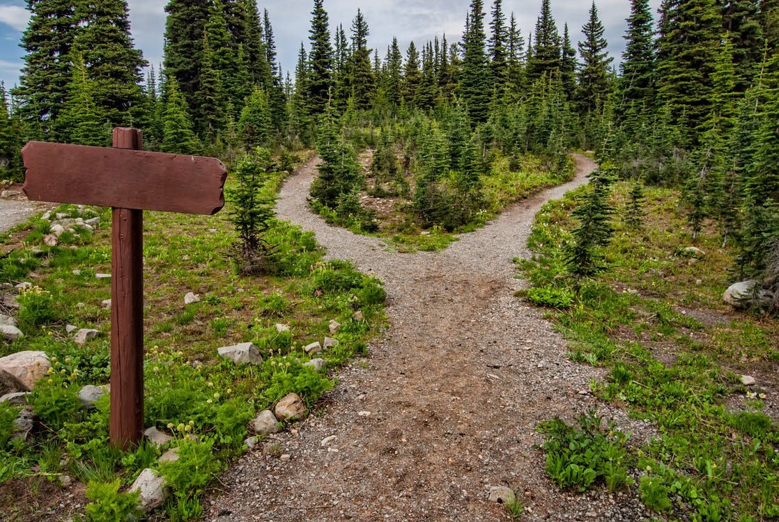 Picture: Two paths split off from a single path in a forest